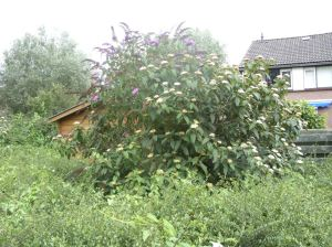 Eigen innovaties tuinuitvindingen tuinontwikkeling